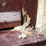 White-Rot-Damage-to-a-door-frame-in-Leeds.jpg